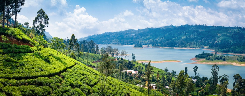 Beautiful view on tea plantation near Nuwara Eliya, Sri Lanka