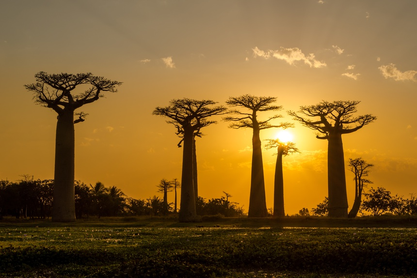 Evening in Baobab avenue