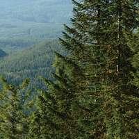 Forêt USA