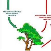 Schéma cycle du carbone Giec